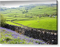 Bluebells Growing On A Limestone Hill Acrylic Print by Ashley Cooper