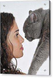 British Shorthair Cat Acrylic Print by Ilan Rosen
