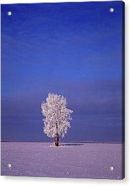 Canada, Manitoba, Dugald, Hoarfrost Acrylic Print