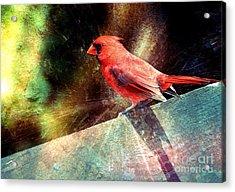 Cardinal  Acrylic Print by Elaine Manley