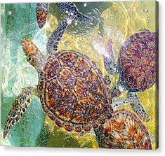 Cayman Turtles Acrylic Print by Carey Chen