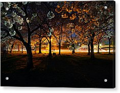 Cherry Blossoms At Night Acrylic Print