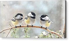 3 Chickadees On A Snowy Day Acrylic Print