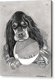 Cocker Spaniel Dog Portrait Acrylic Print by Olde Time  Mercantile