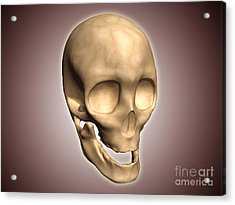Conceptual Image Of Human Skull Acrylic Print by Stocktrek Images