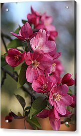 Acrylic Print featuring the photograph Crabapple Blossoms by Vadim Levin