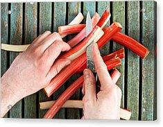 Cutting Rhubarb Acrylic Print by Tom Gowanlock