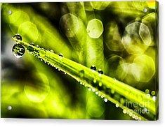 Dew On Grass Acrylic Print by Thomas R Fletcher