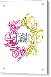 Dna Clamp And Dna Acrylic Print by Ramon Andrade 3dciencia