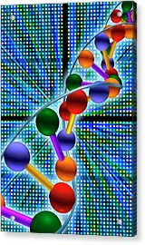 Dna Microarray And Double Helix Acrylic Print