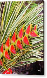 Dominica, Roseau, Tropical Vegetation Acrylic Print by Walter Bibikow