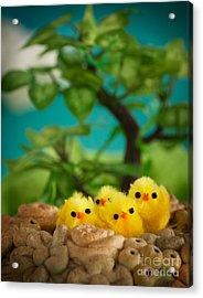 Easter Chicks Acrylic Print by Mythja  Photography