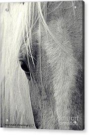 Equine Study Acrylic Print by Laurinda Bowling