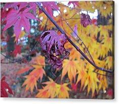 Fall Splendor  Acrylic Print by Valia Bradshaw