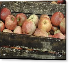 Acrylic Print featuring the photograph French Market Apples by Catherine Fenner