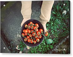 Fresh Tomatoes Acrylic Print by Mythja  Photography