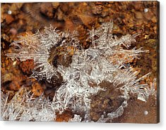 Frozen Beauty Aka Ice Is Nice Viii Acrylic Print by Bijan Pirnia