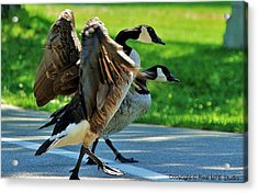 Geese Crossing Acrylic Print