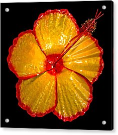 Giant Hibiscus Acrylic Print by Diane Snider