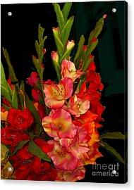Gladiolus Acrylic Print by Merton Allen