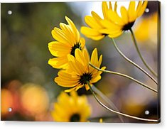 Golden Acrylic Print by Katherine White