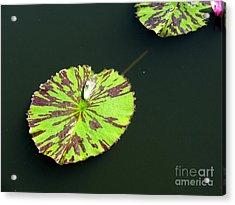 3 Acrylic Print