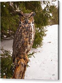 Great Horned Owl Acrylic Print by Simon Jones