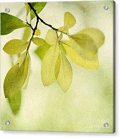 Green Foliage Series Acrylic Print by Priska Wettstein