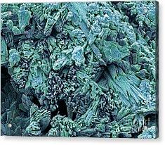 Gypsum Crystals, Sem Acrylic Print by Steve Gschmeissner