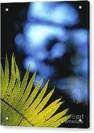Hapuu Fern Acrylic Print by G. Brad Lewis
