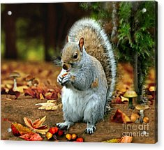 Harry The Squirrel Acrylic Print