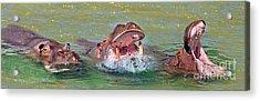 3 Hippos Having Fun  Acrylic Print by Jim Fitzpatrick
