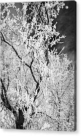 hoar frost on bare tree branches during winter Forget Saskatchewan Canada Acrylic Print by Joe Fox