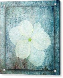 Hydrangea Acrylic Print by Lynn Bolt