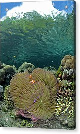 Indian Ocean, Indonesia, Raja Ampat Acrylic Print
