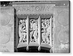 Indiana University Myers Hall Anatomy Acrylic Print by University Icons