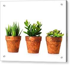 3 Indoor Plants Acrylic Print by Boon Mee