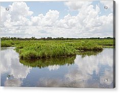 La, Lafitte, Airboat Swamp Tour Acrylic Print by Jamie and Judy Wild