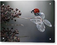Ladybird On Hydrangea. Acrylic Print by Ellen Van Deelen