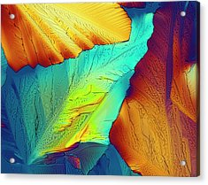 Light Micrograph Of Citric Acid Crystals Acrylic Print by Alfred Pasieka