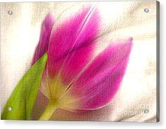 Linen Tulip Acrylic Print by Bobbi Feasel