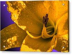Mellow Yellow Acrylic Print by Brian Stevens