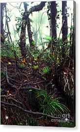 Misty Rainforest El Yunque Acrylic Print by Thomas R Fletcher