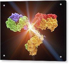 Monoclonal Antibody Igg2a Acrylic Print