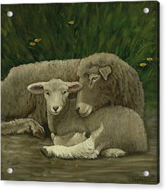 Mother And Lamb Acrylic Print by John Reynolds