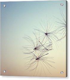 Nature Abstract Acrylic Print by Sabina  Horvat
