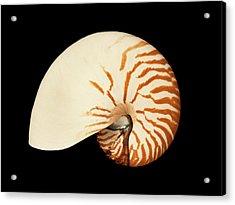 Nautilus Pompilius Acrylic Print