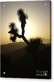 New Photographic Art Print For Sale Joshua Tree At Sunset Acrylic Print