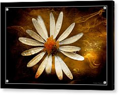 Acrylic Print featuring the photograph On Fire by Michaela Preston