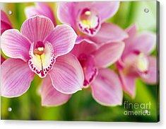 Orchids Acrylic Print by Carlos Caetano